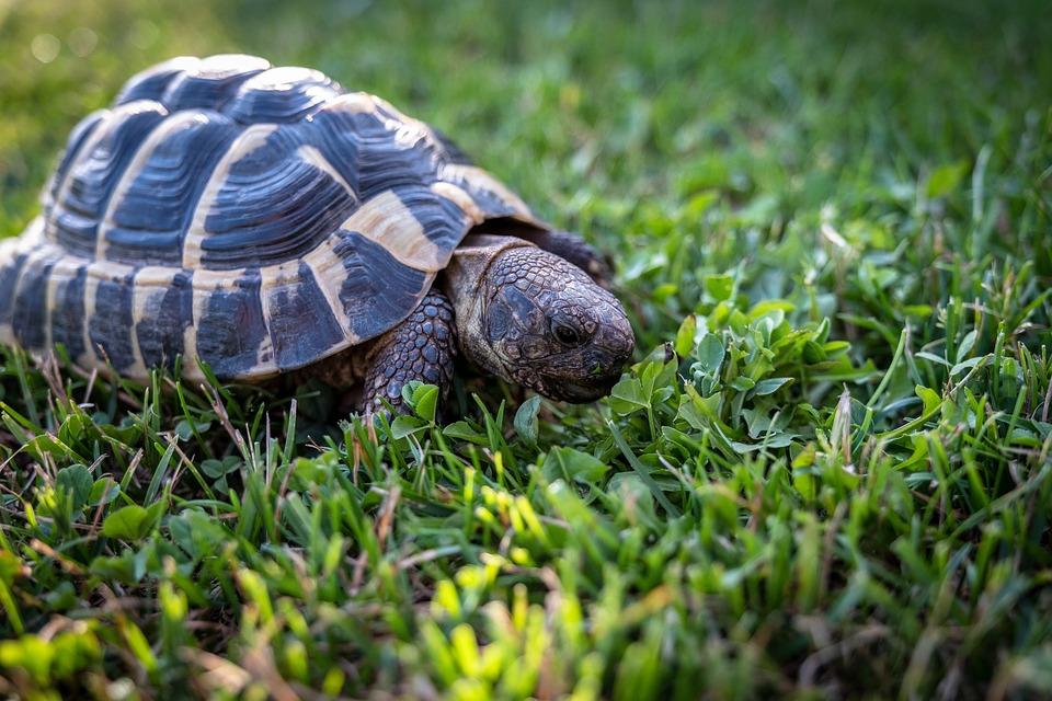 Черепаха в траве картинки