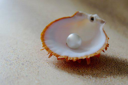 Shell, The Beach Pearl, Beach, Sand