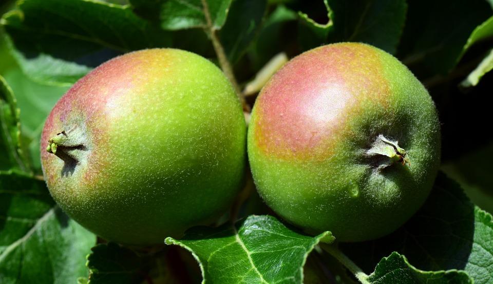 Apple, Verde, Frutta, Melo, Kernobstgewaechs, Sano