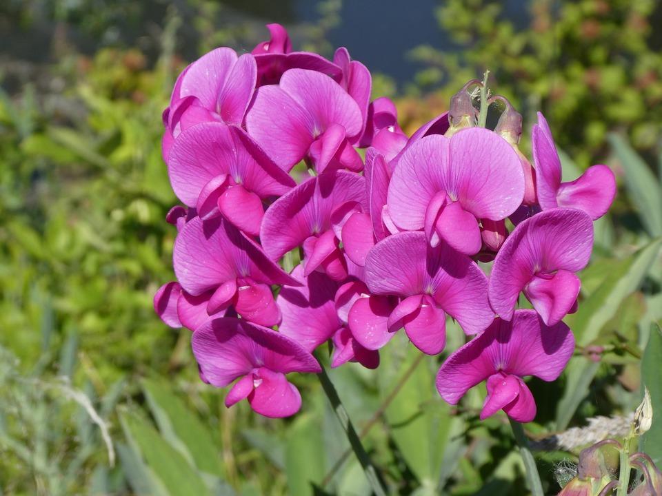 Flower wild pink free photo on pixabay flower wild pink wild flowers nature summer bloom mightylinksfo