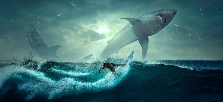 Surfing man and sharks in blue sea