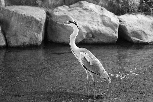 Fotky Pánske vtáky