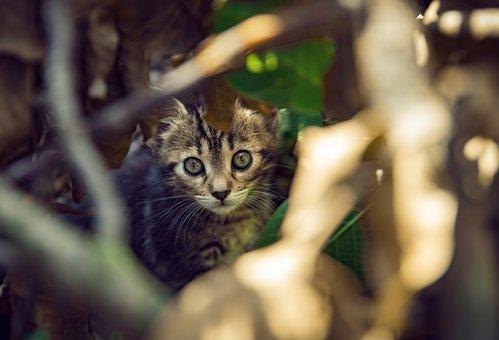 Kitten, Gray Cat, Kitty, Cute, Cat
