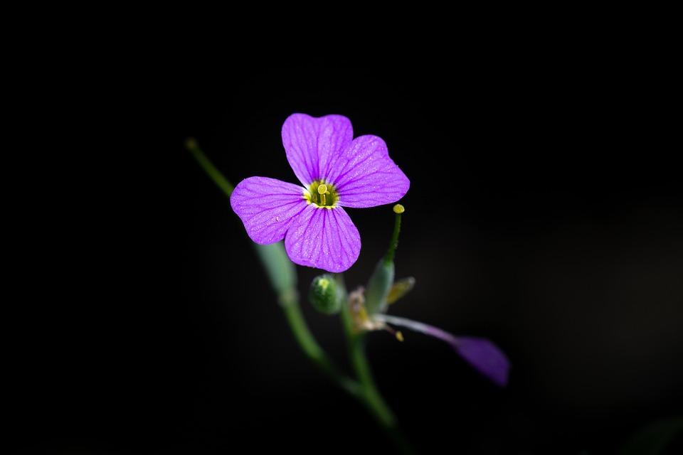Fiori Piccoli.Fiore Rosa Piccoli Piccolo Foto Gratis Su Pixabay