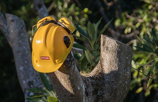 Tree, Sawn, Pruning, Hard Hat, Timber, avocado tree, disease