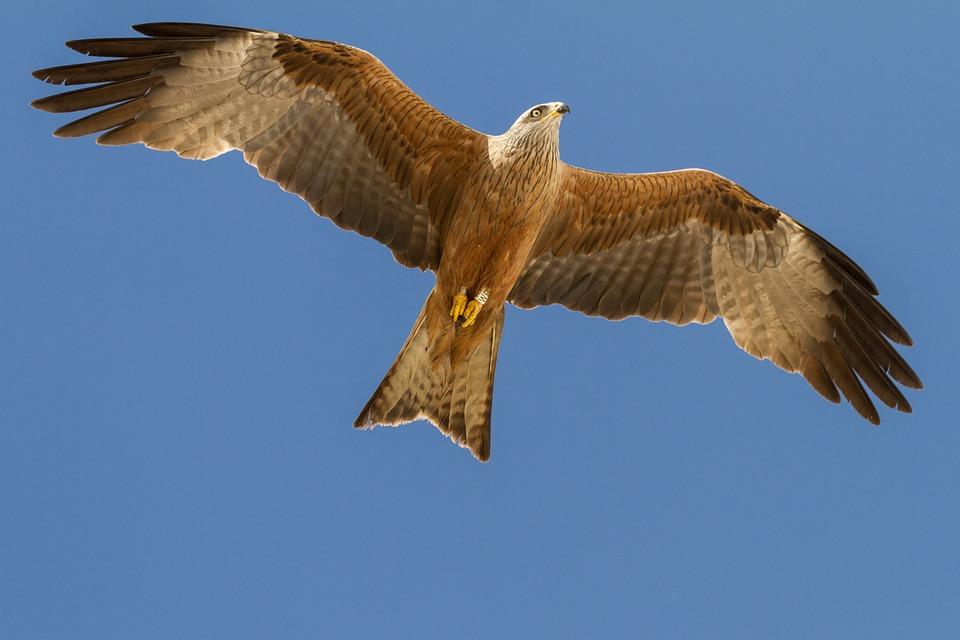 Migraciones de las aves