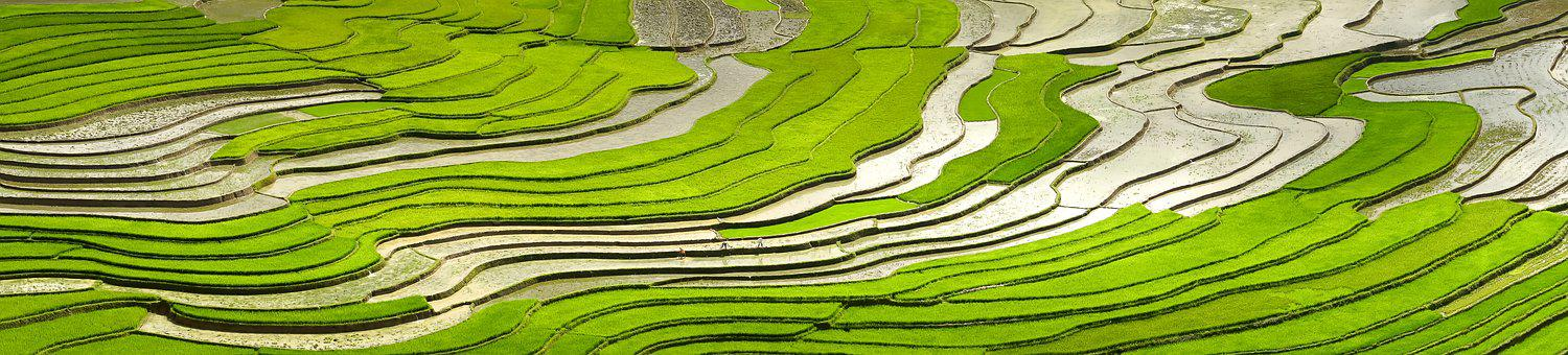 700+ Free Rice Field & Rice Images - Pixabay