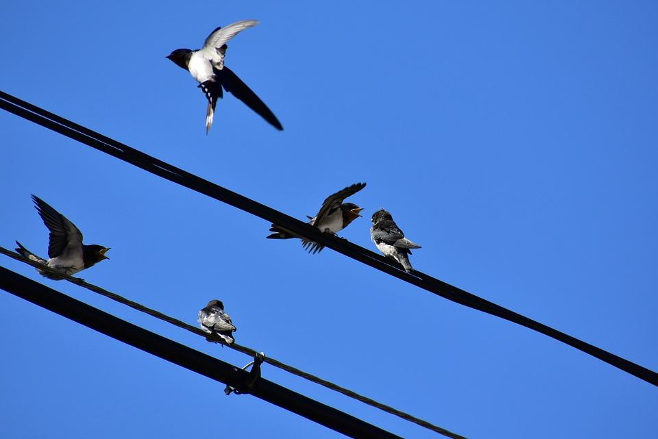 Tier Himmel Elektrische Leitungen · Kostenloses Foto auf Pixabay