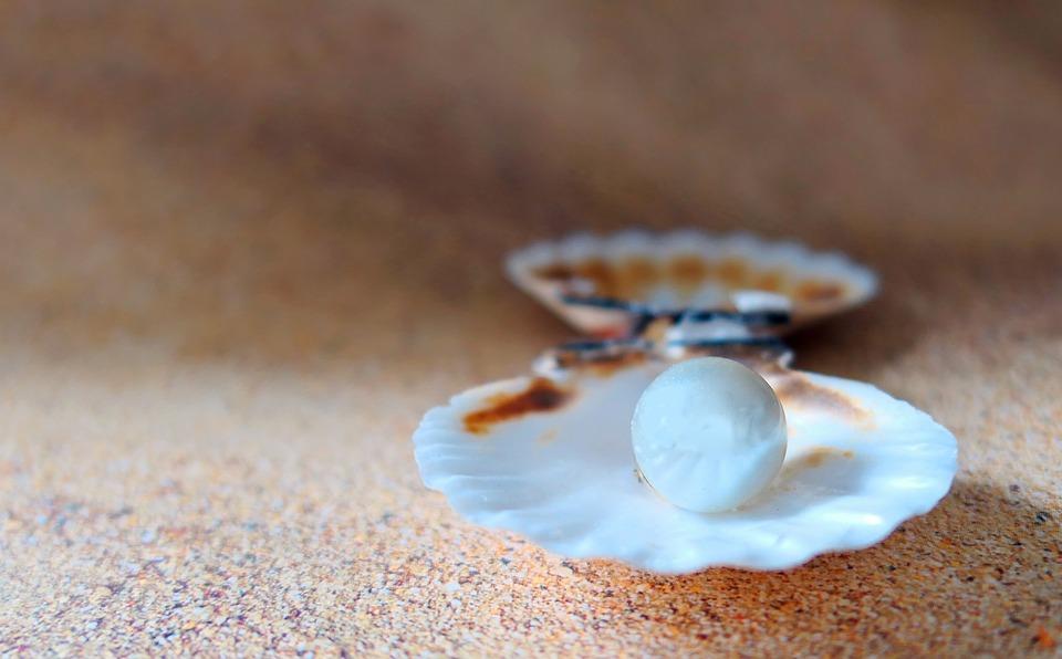 シェル, ビーチパール, ビーチ, 砂, 貝殻, 海, 塞ぎます, 真珠の母, 石灰, クローズ アップ