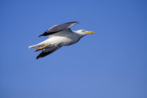 Μεγάλο μαύρο πουλί σε λευκό