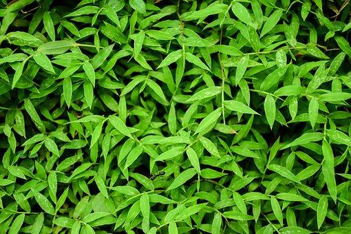 Background, Grass, Green Grass, Ant
