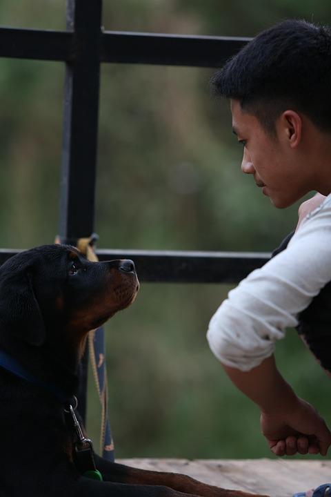 Rottweiler, Perro, Cachorro, Niño