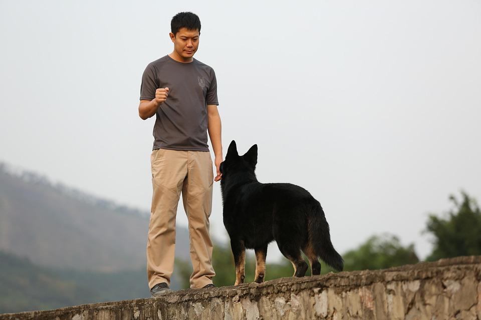Shepherd Training Harmony - Free photo on Pixabay