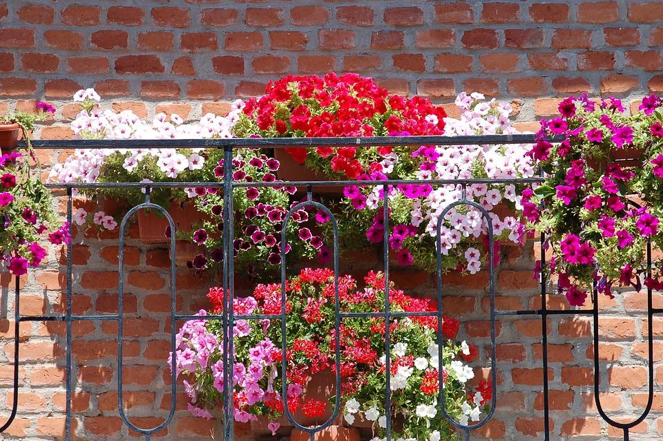 Vazen Op Balkon : Balkon met bloemen bloom zomer · gratis foto op pixabay