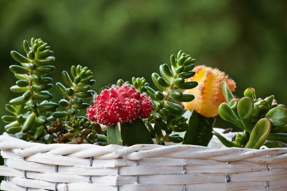 植物, 多肉植物, サボテン, ゴミ箱, グリーン, 植物学, 花, テラス, 観賞用, いばら