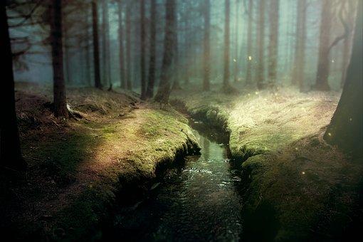 Background Image, Fantasy, Forest
