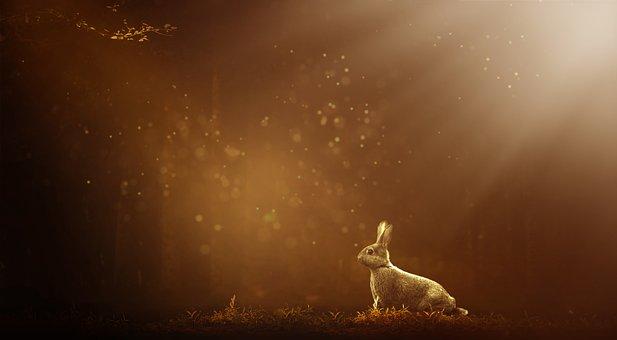Hase, Wald, Natur, Kaninchen, Tier