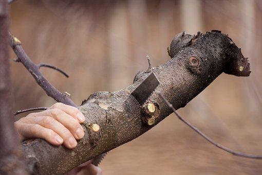 Cutting, Saw, Tree, Tool, Work, Blade