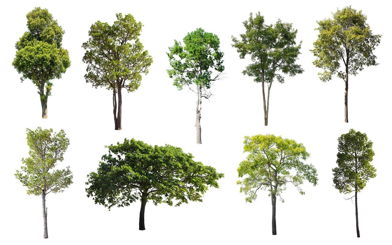 Много деревьев картинки