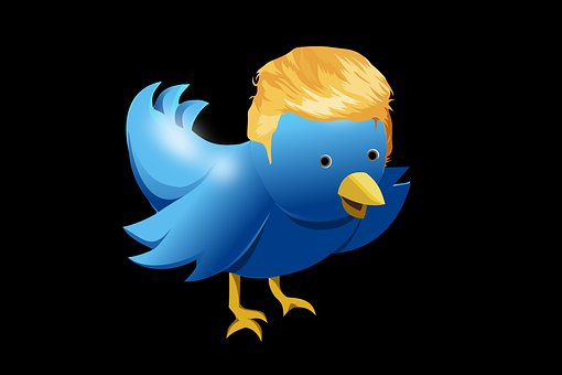 Twitter, Coiffure, Trump, Bird, Tweet