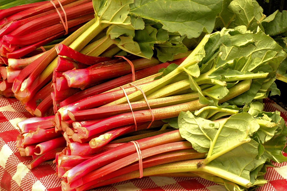 Market Fresh Rhubarb Vegetables - Free photo on Pixabay