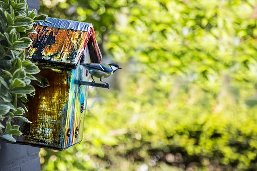 Bird, Birdhouse, Garden, Shelter, Nest
