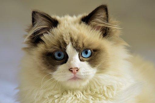 Katze, Katzen, Haustier, Weiß, Jung