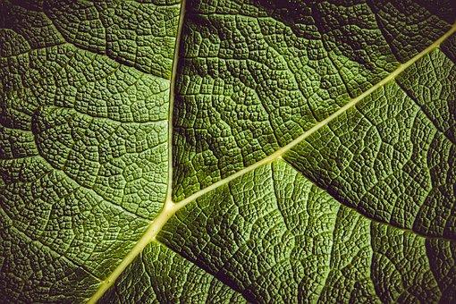 70 000 Free Leaf Leaves Images Pixabay
