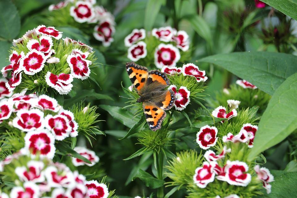 100+ Gambar Bunga Cengkeh Paling Cantik