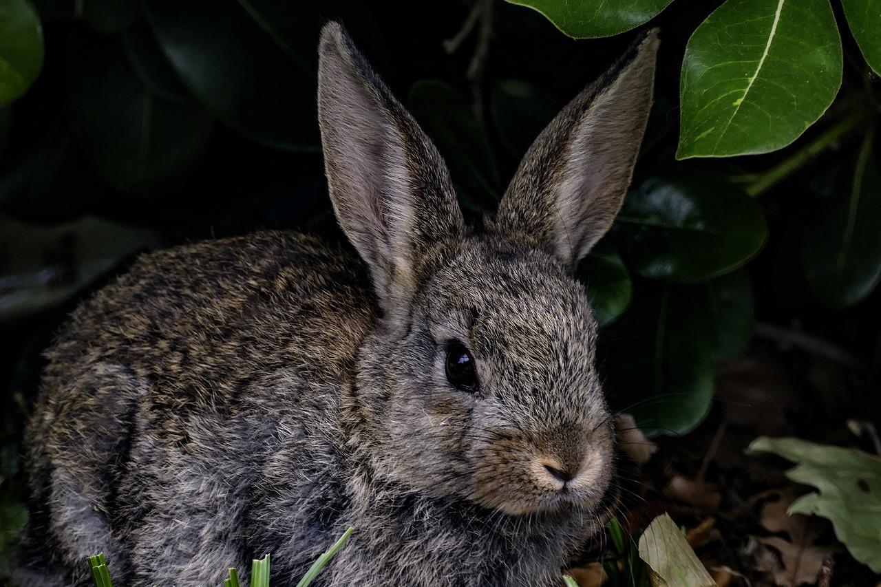 фотографии кроликов и зайцев склонах горы