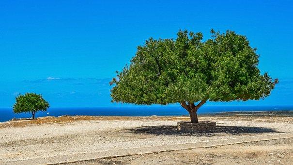树, 景观, 地平线, 天空, 风景, 地中海, 夏天, 一天