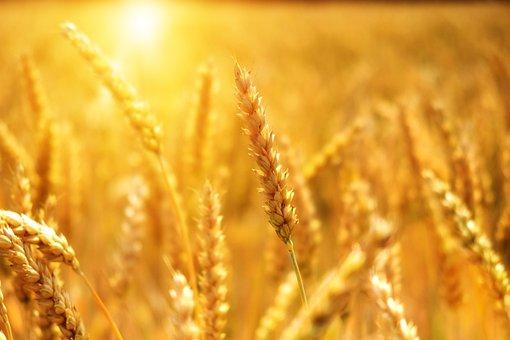 ИКАР снизил прогноз экспорта пшеницы из РФ в этом сельхозгоду до 33,5 млн тонн