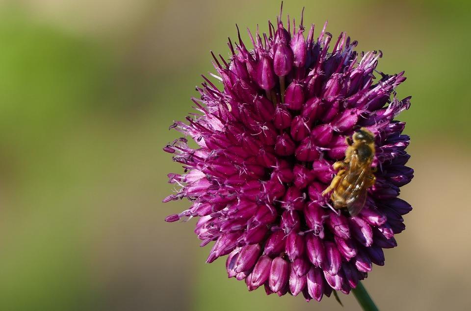 Natur Garten Blume Kostenloses Foto Auf Pixabay