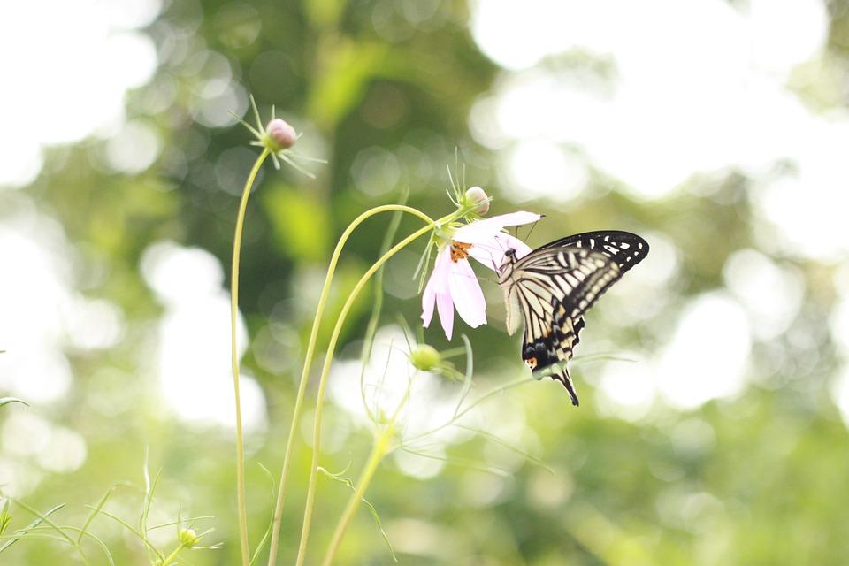 Flowers Plants Nature · Free photo on Pixabay