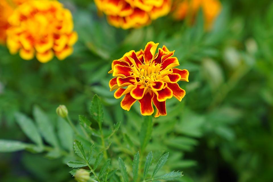 Blumen Kinderzimmer In Kostenloses Foto Auf Pixabay
