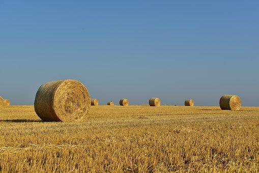 Hay, Straw Bales, Hay Bales, Straw