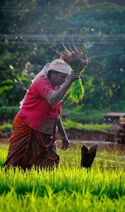 A woman farmer. Image: Pixabay