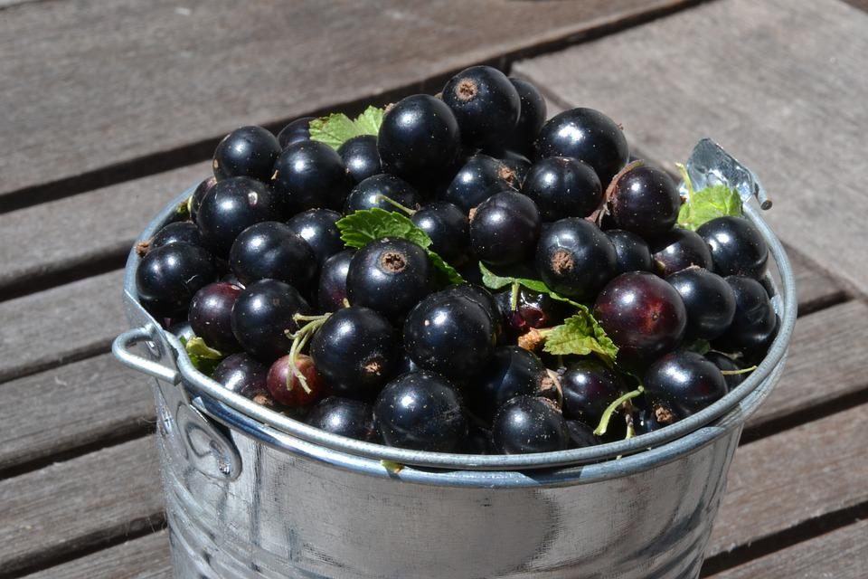 Czarne Porzeczki, Owoców, Zdrowy, Lato, Bio, Pyszne