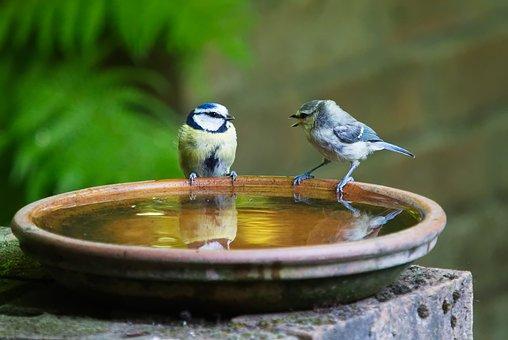 Conversation, Talk, Bird, Blue, Tit