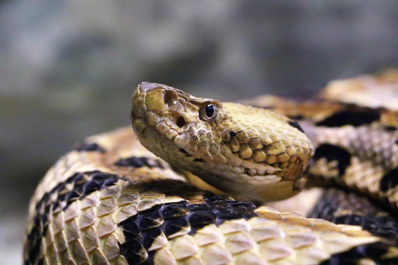 Картинки змей гремучая змея