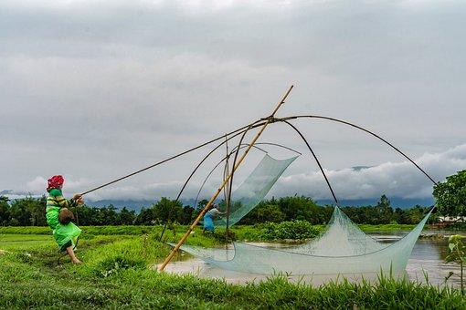 Индия: Производство рыбы растет