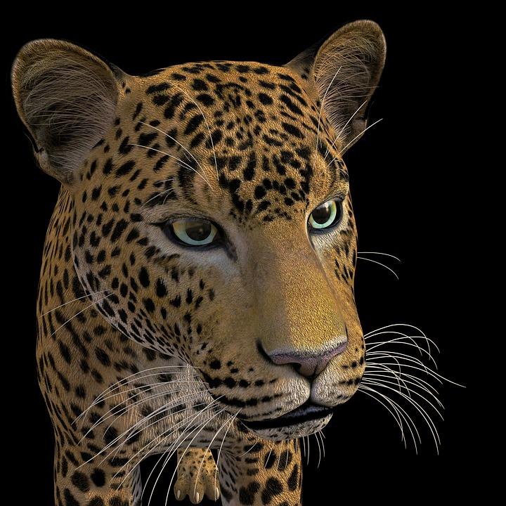 Macan Tutul Kucing Besar Liar - Gambar gratis di Pixabay