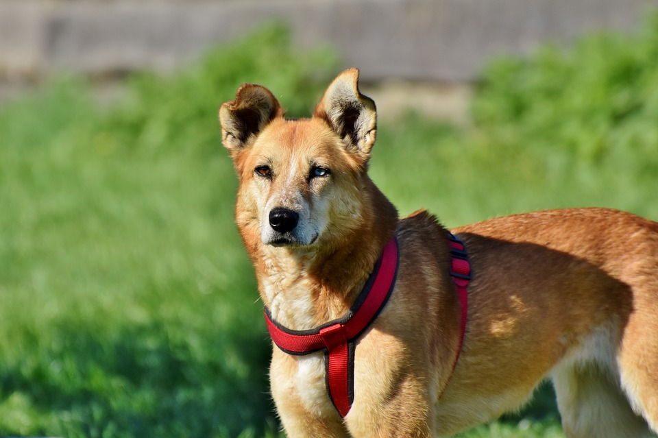 Dog, Hybrid, Pet, Mixed Breed Dog, Attention, Friend