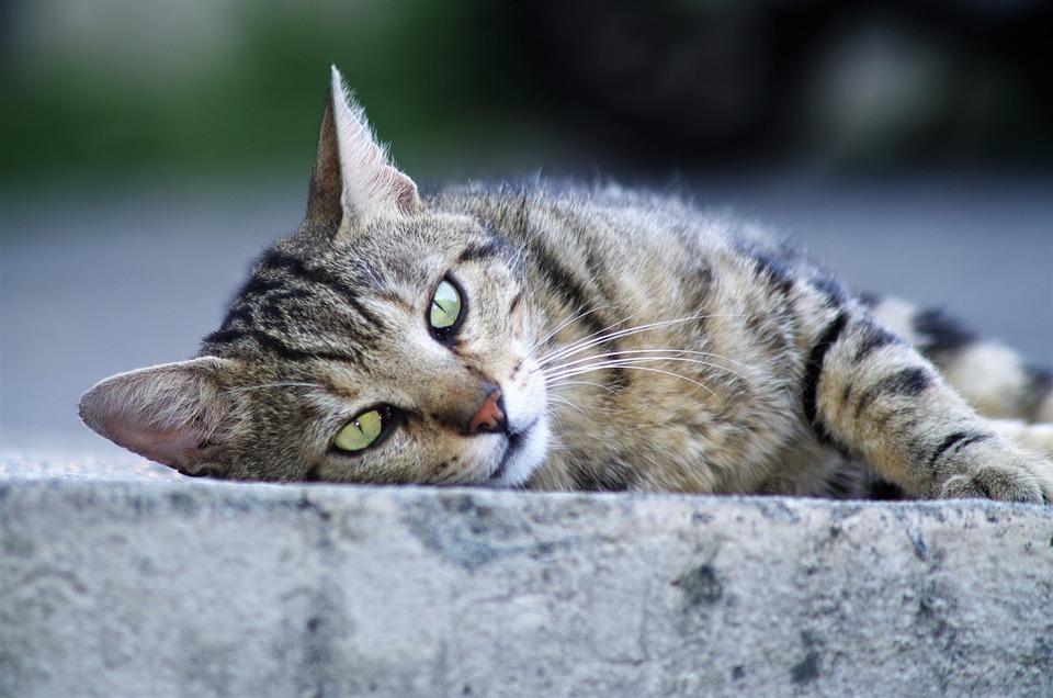 hd kočička fotky