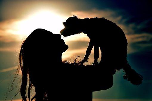 サンセット, バックライト, シルエット, 太陽, 人間, 夜明け, 夜, 犬
