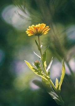 Yellow Flowers Images Pixabay Download Free Pictures