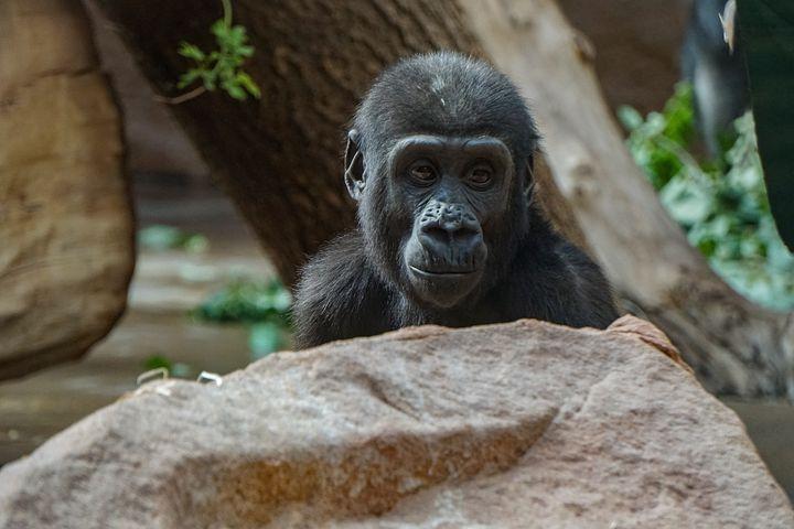 мальтийские картинки грустная обезьяна требования форме трудно