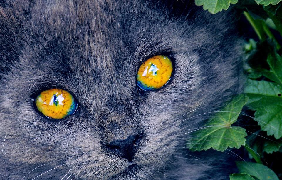 světle černá kočička fotky