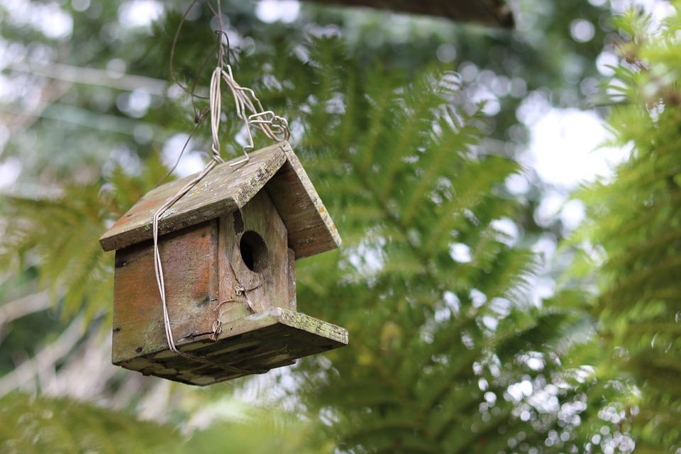 Swell Wooden Bird House Nest Free Photo On Pixabay Download Free Architecture Designs Scobabritishbridgeorg