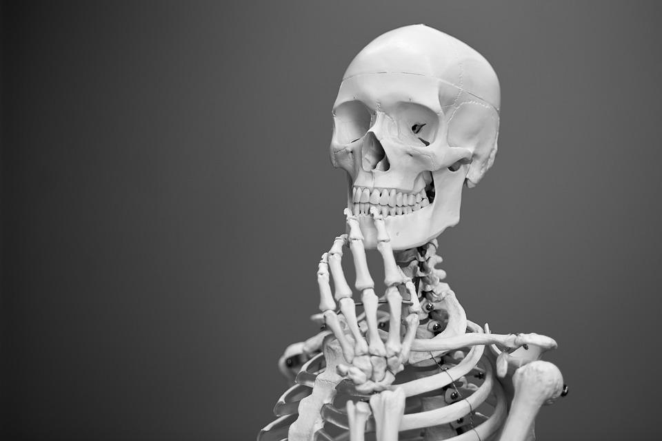 Skelett Anatomie Knochen · Kostenloses Foto auf Pixabay